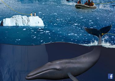 Catalogs of whales and microplastics in the ocean - the upcoming Ukrainian expedition to Antarctica will make 5 new types of research