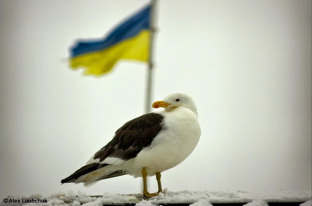 Українській антарктичній станції – 23 роки. Як усе відбувалося?