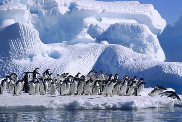 Україні повернули повноправне членство у Науковому Комітеті з антарктичних досліджень