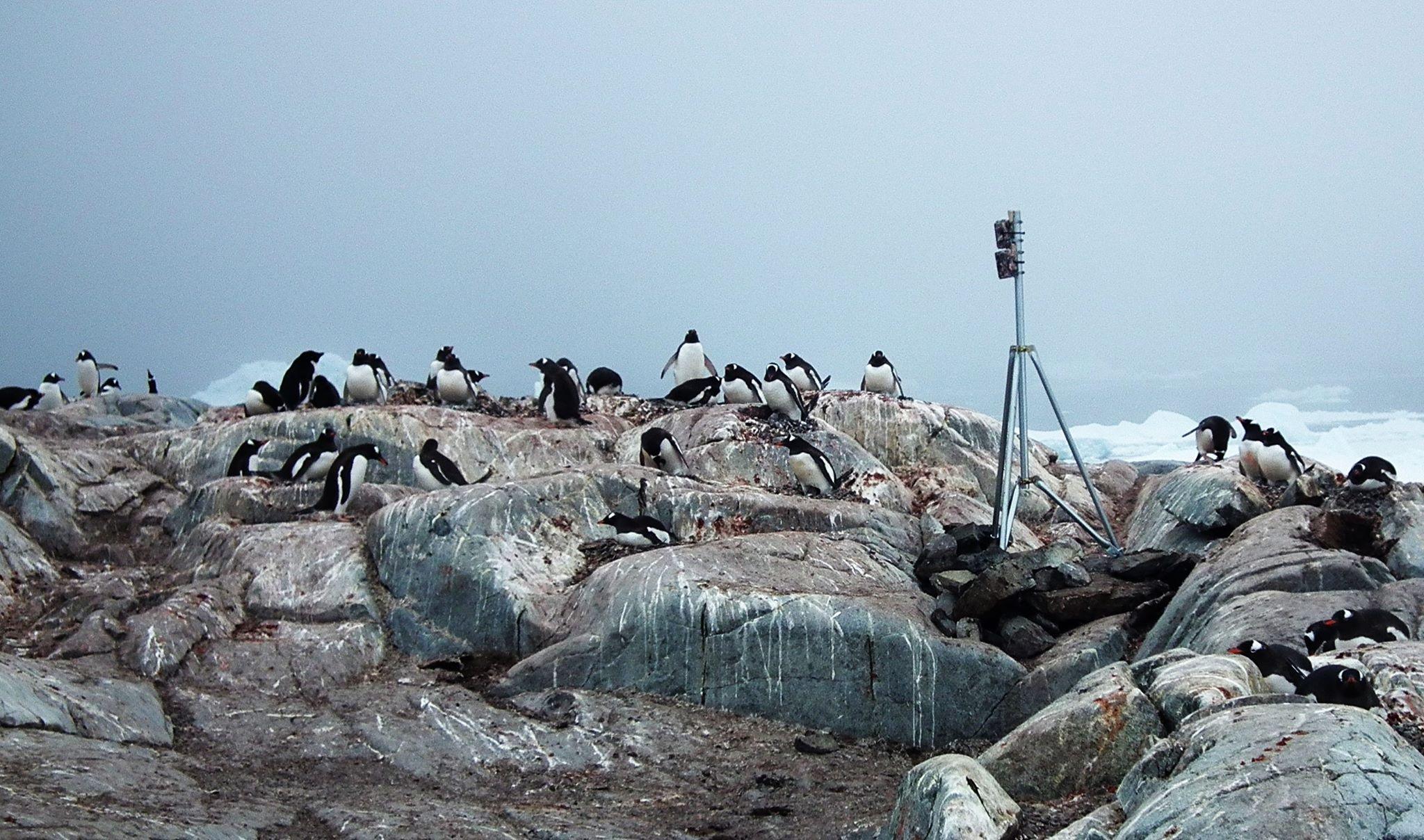 Діти, рахуймо пінгвінів! Залучаємо школярів до досліджень екології Антарктики
