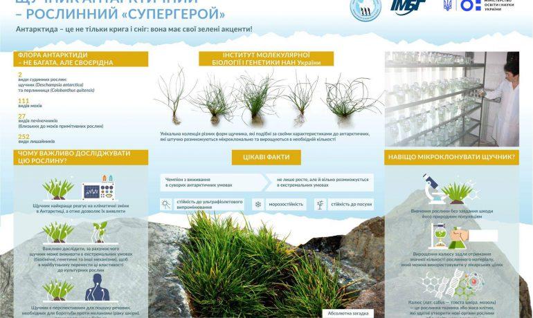 Щучник антарктичний – рослина-«супергерой». Презентуємо антарктичні біотехнології на Innovation Market