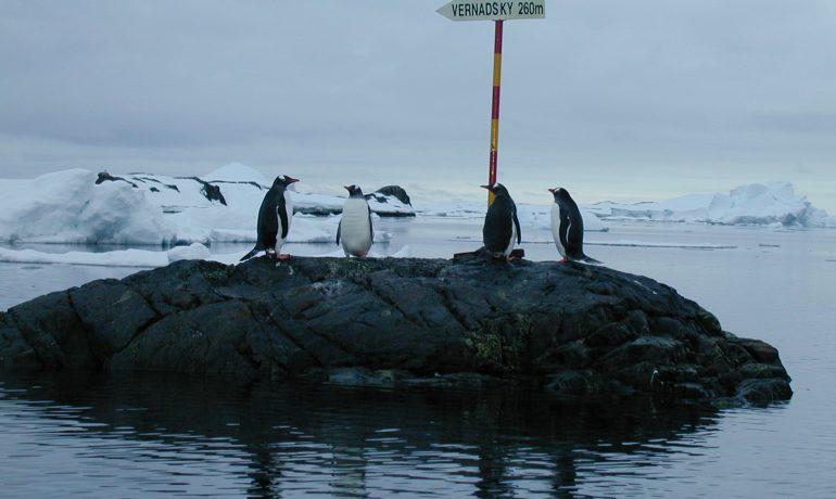Діти порахували пінгвінів. Підсумки освітнього проекту НАНЦ