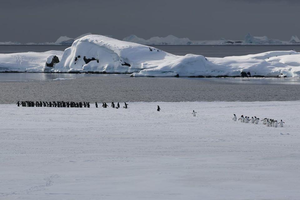 27 травня розпочинаємо «Антарктичні уроки»