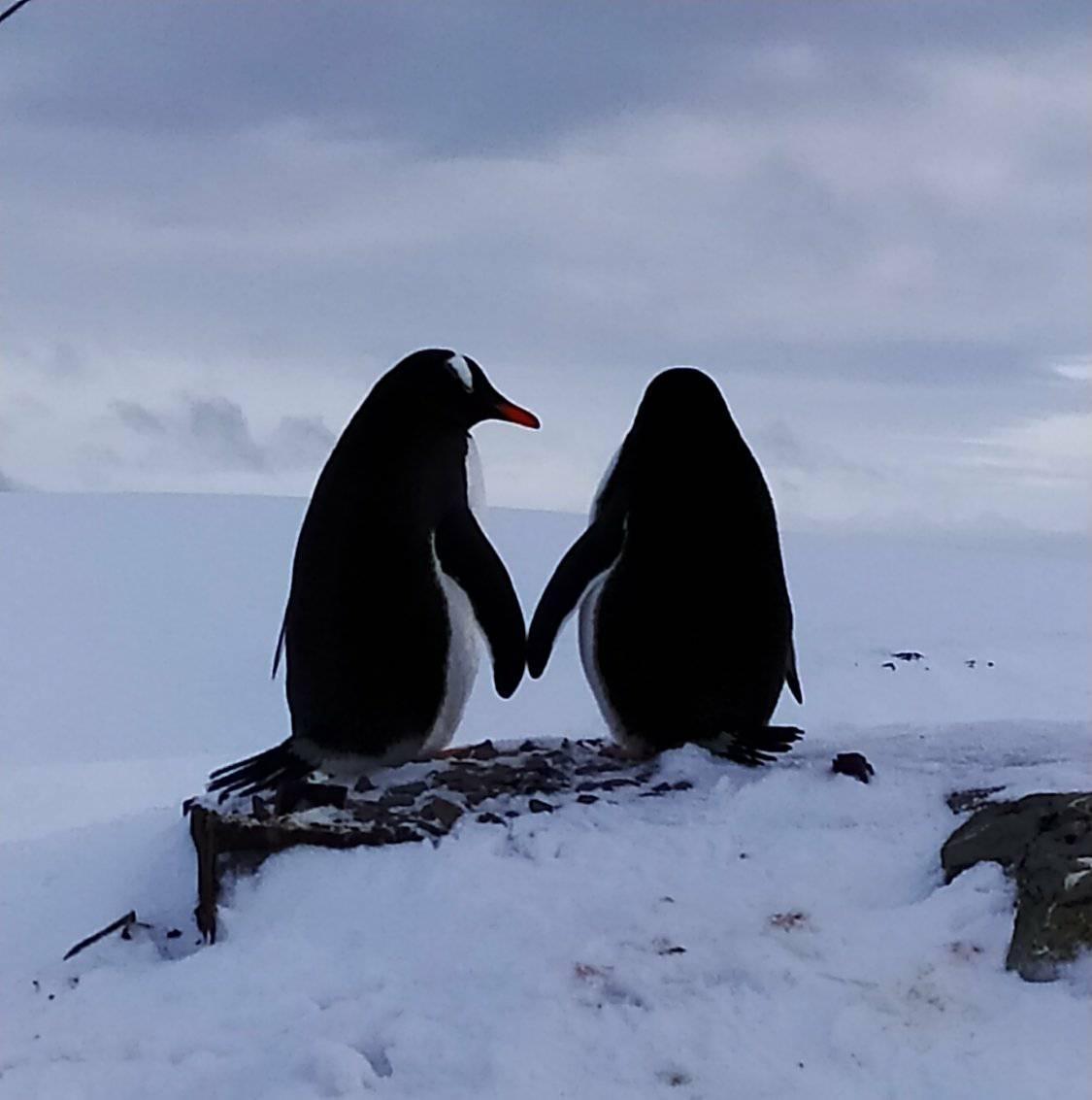 Визначено переможців науково-освітнього проєкту «Вчителі та учні беруть участь в екологічному моніторингу Антарктиди»