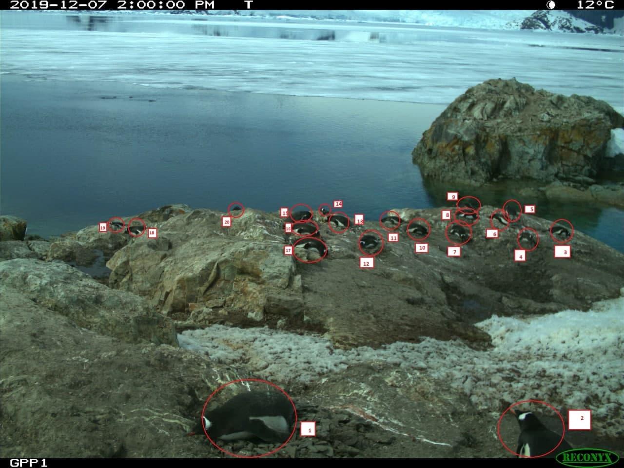 Найуважніші спостерігачі за пінгвінами: визначено переможців конкурсу з екологічного моніторингу Антарктиди