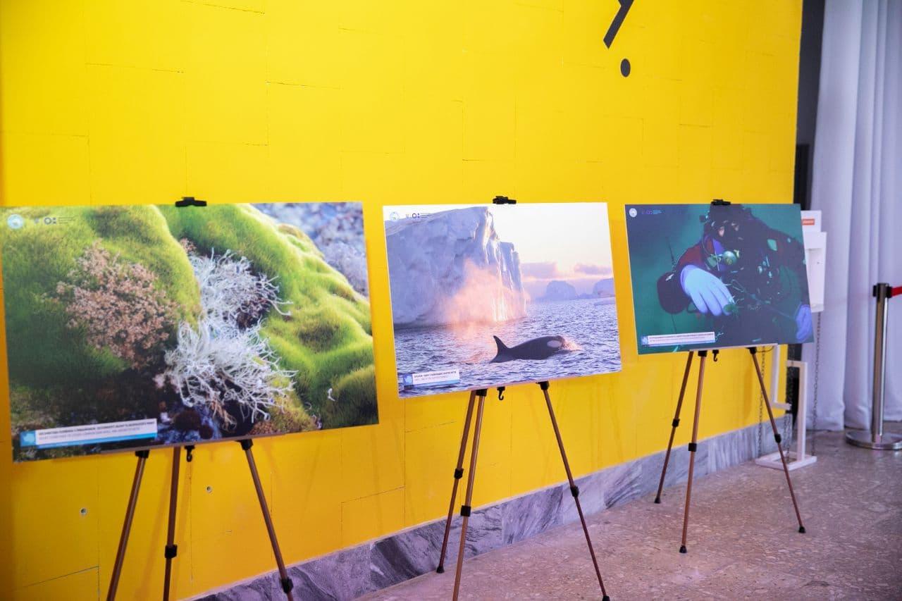 Влітку – на крижаний континент: з 11 червня у Корсунь-Шевченківському працюватиме антарктична виставка