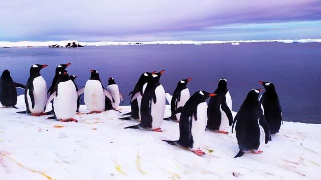 «Антарктичні дослідження – це внесок у майбутнє, у престиж і економіку країни»