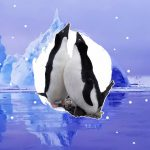 Анна Соіна: добровільна ізоляція серед антарктичних красот